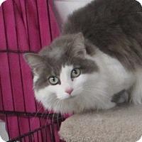 Adopt A Pet :: Fluffy - Jackson, MO