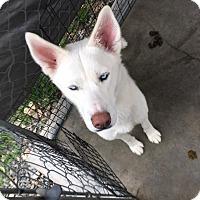 Adopt A Pet :: Lucy - Yucaipa, CA