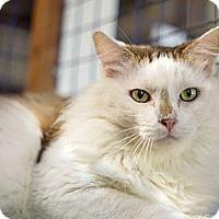 Adopt A Pet :: Tristan - Davis, CA