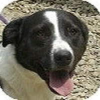Adopt A Pet :: Perry - Hamilton, ON