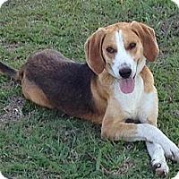 Adopt A Pet :: Noah - Shirley, NY