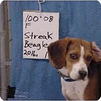 Adopt A Pet :: Streak/Pending - Zanesville, OH