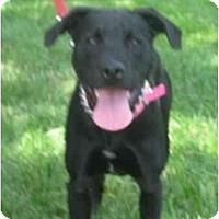 Adopt A Pet :: Jet - Chicago, IL