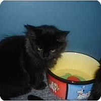 Adopt A Pet :: Jada - Solon, OH