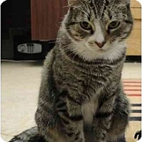 Adopt A Pet :: Stormy - Mission, BC