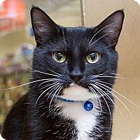 Adopt A Pet :: Aaliyah - Irvine, CA