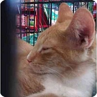 Adopt A Pet :: Thunder (po) - Little Falls, NJ