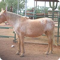 Adopt A Pet :: Gypsy - Apache Junction, AZ