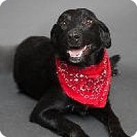 Adopt A Pet :: Grady - Louisville, KY