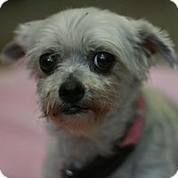 Adopt A Pet :: Cassie - Canoga Park, CA