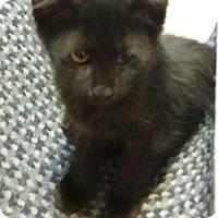 Adopt A Pet :: Steffon - Chandler, AZ