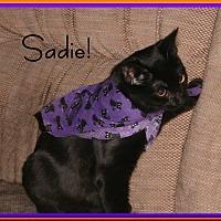 Adopt A Pet :: Sadie - Santa Clarita, CA
