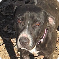 Adopt A Pet :: Leia - please give me a chance - Hagerstown, MD