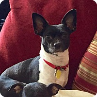 Adopt A Pet :: Kate (MD) - Poolesville, MD