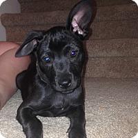 Adopt A Pet :: Emma - Memphis, TN