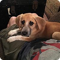 Adopt A Pet :: Princess Di - Hohenwald, TN