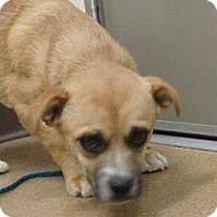 Adopt A Pet :: Roy - Las Vegas, NV