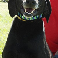Labrador Retriever Mix Dog for adoption in Grayson, Louisiana - Black Jack