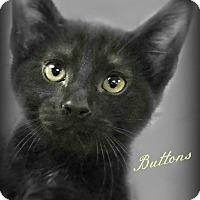 Adopt A Pet :: Buttons - Benton, AR