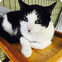 Adopt A Pet :: Layla - Holland, MI
