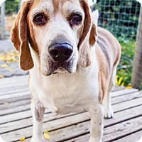 Adopt A Pet :: Coby - Prosser, WA