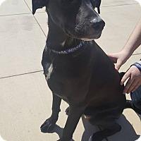 Adopt A Pet :: Kai - Fresno, CA