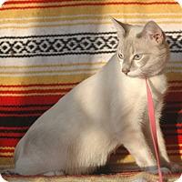 Adopt A Pet :: Milo - Anderson, SC