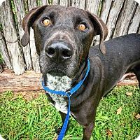 Adopt A Pet :: Marshall - Fredericksburg, TX