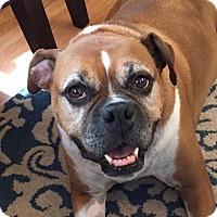 Adopt A Pet :: America - Denver, CO