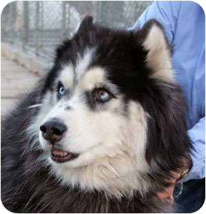 Thank You Petsmart Charities Of Canada also 6679987 Boise Idaho Husky Mix additionally 2014 Holiday Bazaar likewise Blue Cross Dog Show And Fun Day in addition Visitormap. on adoption animals list