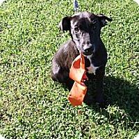 Adopt A Pet :: Maxwell - Homewood, AL