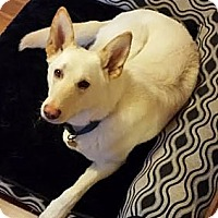 Adopt A Pet :: Bear - Mill Creek, WA