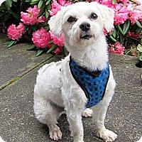 Adopt A Pet :: Chuckles - Gig Harbor, WA