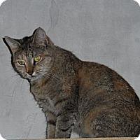 Adopt A Pet :: Paula - Tarboro, NC
