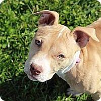 Adopt A Pet :: Mia - Reisterstown, MD
