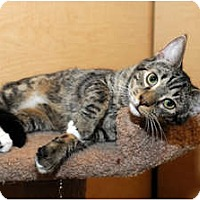 Adopt A Pet :: Stanley - Farmingdale, NY