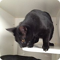 Adopt A Pet :: Romeo - Laguna Woods, CA