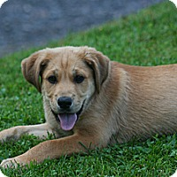 Adopt A Pet :: Sam - Morgantown, WV