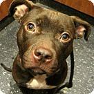 Adopt A Pet :: Baby Murphy