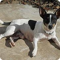 Adopt A Pet :: GeeGee - Oklahoma City, OK