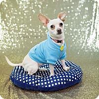 Adopt A Pet :: Minnie - Muskegon, MI