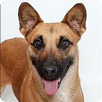 Adopt A Pet :: Rex - San Luis Obispo, CA