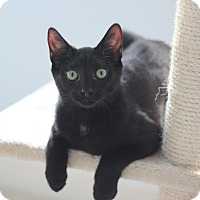 Adopt A Pet :: Magic - Richmond, VA