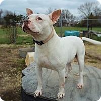 Adopt A Pet :: Mila - Hamburg, PA