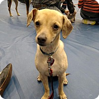 Adopt A Pet :: Harmony - Grand Rapids, MI