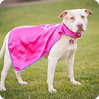 Adopt A Pet :: Princess - PEORIA, AZ