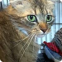 Adopt A Pet :: Dolly Parton $10 TO ADOPT - San Jose, CA