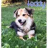 Adopt A Pet :: Teddy - Wilmington, DE