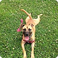 Adopt A Pet :: 1512-0035 Sammy - Virginia Beach, VA