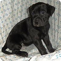 Adopt A Pet :: Aspen Heitz (Troll Litter) - Fairmont, WV